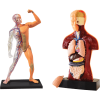 Brinquedo Science 4 You Corpo Humano 2 em 1
